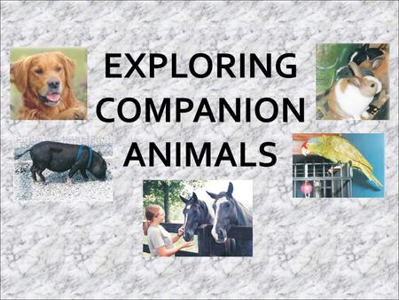  Companionship and pleasure are important to people. A companion animal is an animal that is used to provide humans with fun and friendship through close.