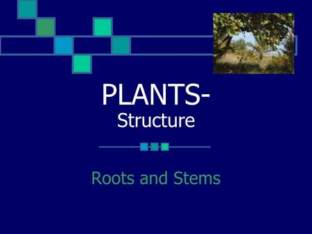 PLANTS- Structure Roots and Stems. ROOTS-Function 1. Anchor the plant to the soil 2. Absorb water and minerals from the soil 3. May store food 4. Transport.