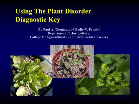 Using The Plant Disorder Diagnostic Key By Paul A. Thomas, and Bodie V. Pennisi Department of Horticulture, College Of Agricultural and Environmental Sciences.