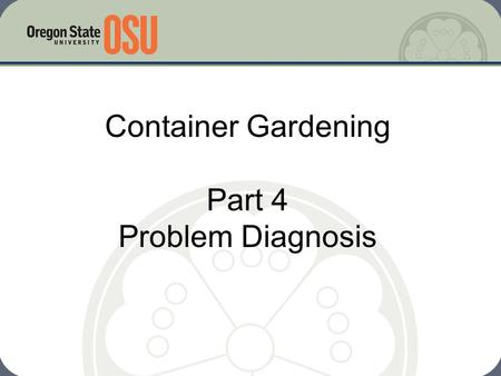 Container Gardening Part 4 Problem Diagnosis