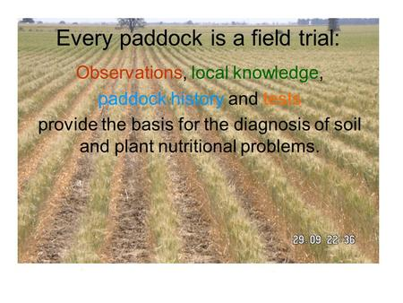 Every paddock is a field trial: Observations, local knowledge, paddock history and tests provide the basis for the diagnosis of soil and plant nutritional.