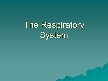 The Respiratory System I. Overview  Consists of 6 major organs: nose, pharynx, larynx, trachea, bronchial tubes, and lungs  Function together to perform.