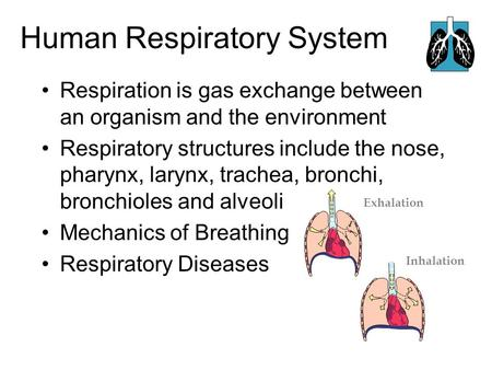 Human Respiratory System Respiration is gas exchange between an organism and the environment Respiratory structures include the nose, pharynx, larynx,