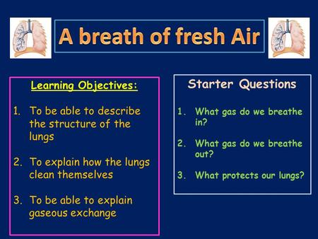 Learning Objectives: 1.To be able to describe the structure of the lungs 2.To explain how the lungs clean themselves 3.To be able to explain gaseous exchange.