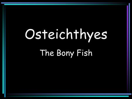 Osteichthyes The Bony Fish. Class Osteichthyes Characterized by having: Bone in their skeleton An operculum covering the gill openings A swimbladder or.