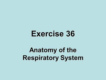 Exercise 36 Anatomy of the Respiratory System. Objectives Respiratory system structuresRespiratory system structures Respiratory system, pulmonary ventilation,