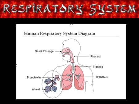 Title Page. Respiratory Intro You may be asking, what is the Respiratory system? Well, the Respiratory system is the system that helps you breath in and.