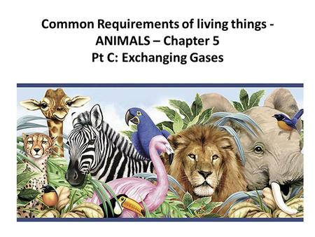 Common Requirements of living things - ANIMALS – Chapter 5 Pt C: Exchanging Gases.