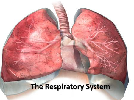 The Respiratory System. Why Do We Need Oxygen? Respiration  a series of chemical reactions to release energy when breaking down compounds Aerobic Respiration.