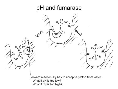 low ph induced insertion peptide Understanding the ph-triggered insertion of the t-domain will also reveal general physicochemical principles underlying membrane protein assembly and signaling on membrane interfaces the ph-low insertion peptide (phlip) is an important tool for drug delivery and visualization of acidic tissues produced by various maladies, including cancer .