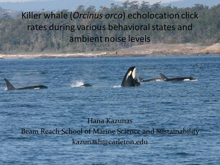 Killer whale (Orcinus orca) echolocation click rates during various behavioral states and ambient noise levels Hana Kazunas Beam Reach School of Marine.