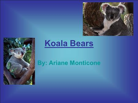 Koala Bears By: Ariane Monticone. Koala bears are interesting animals. Let's go and learn all about this cool animal. There are so many facts about them.