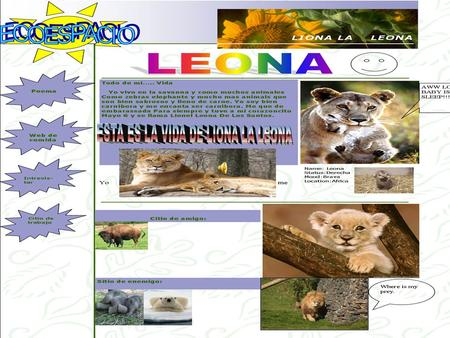 African Savanna Food Web Australian Savanna Food Web Koala bear sun Eucalyptus gum tree.