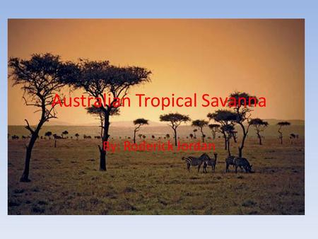 Australian Tropical Savanna By: Roderick Jordan. Savanna Biome Biomes are found in lower latitude areas and though it is a dry and humid area it also.