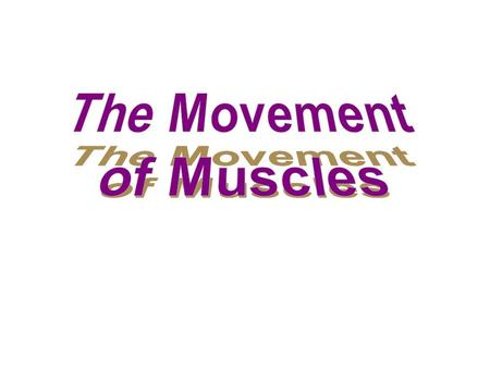 3 Basic Types of Muscle Contractions Concentric – A muscle fibres shorten – Ex. biceps shorten when lifting an object Eccentric – A muscle fibres lengthen.