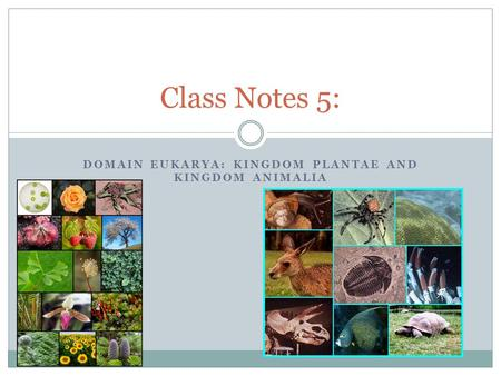 DOMAIN EUKARYA: KINGDOM PLANTAE AND KINGDOM ANIMALIA Class Notes 5: