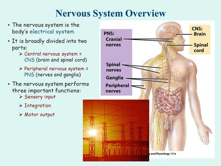 Nervous System Overview The nervous system is the body's electrical system It is broadly divided into two parts:  Central nervous system = CNS (brain.