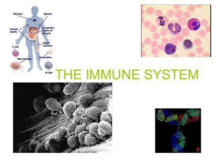 THE IMMUNE SYSTEM. The Perfect WorldThe Real World COL D FL U CHICKEN POX STOMAC H UPSET HELP ME ! HELP ! HELP ME!
