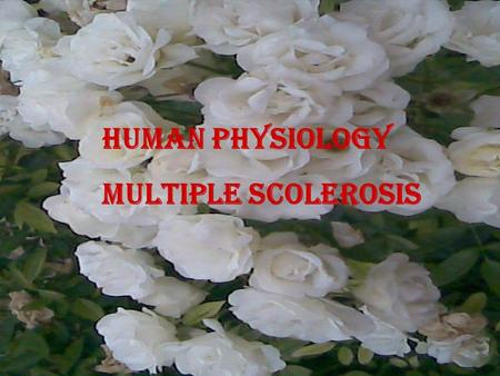 Human Physiology Multiple Scolerosis. Multiple sclerosis is an autoimmune disease that affects the brain and spinal cord (central nervous system) autoimmune.