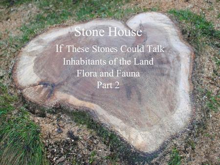 Stone House If These Stones Could Talk Inhabitants of the Land Flora and Fauna Part 2.