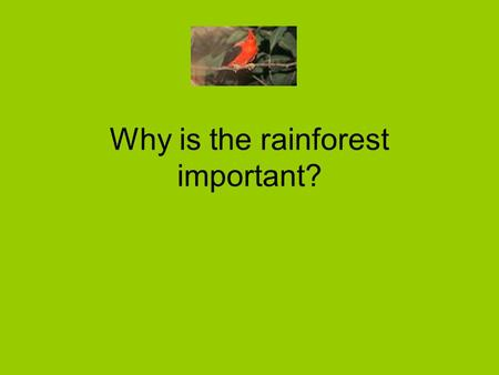Why is the rainforest important?