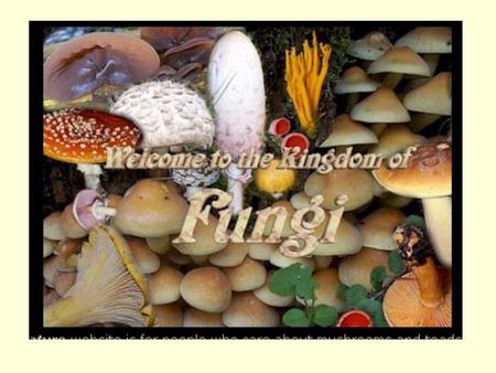 FUNGI. COMMON FUNGI EXAMPLES: –Mushrooms, yeasts, molds, morels, bracket fungi, puff balls.