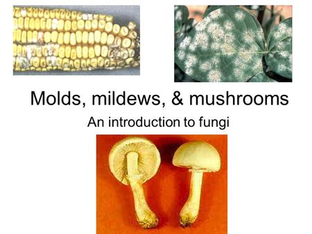 Molds, mildews, & mushrooms An introduction to fungi.