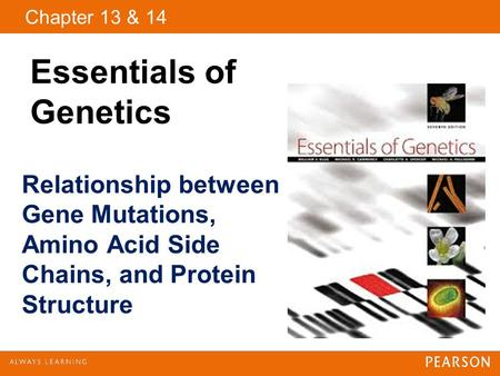 Copyright © 2009 Pearson Education, Inc. Chapter 13 & 14 Essentials of Genetics Relationship between Gene Mutations, Amino Acid Side Chains, and Protein.