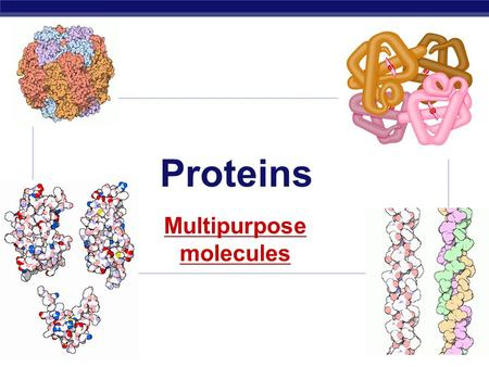 AP Biology 2008-2009 Proteins Multipurpose molecules.