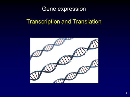 1 Gene expression Transcription and Translation. 2 1.Important Features: Eukaryotic cells a. DNA contains genetic template for proteins. b. DNA is found.