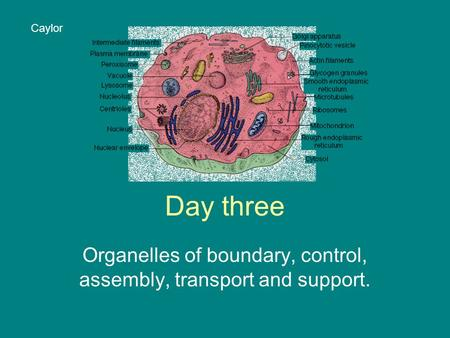 Day three Organelles of boundary, control, assembly, transport and support. Caylor.