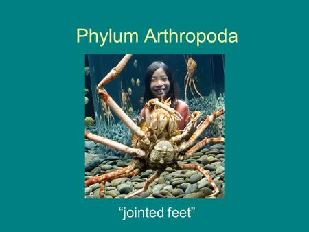 "Phylum Arthropoda ""jointed feet"". Basic Info Largest of all Phyla Include: –Insects –Arachnids –Crustaceans."