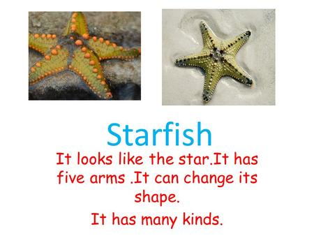 It looks like the star.It has five arms.It can change its shape. It has many kinds. Starfish.
