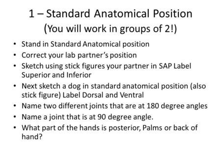 1 – Standard Anatomical Position ( You will work in groups of 2!) Stand in Standard Anatomical position Correct your lab partner's position Sketch using.