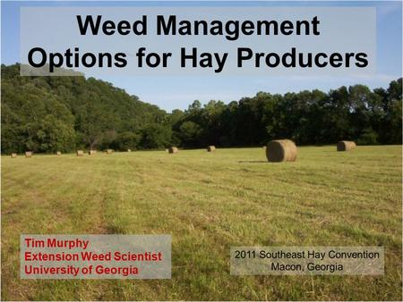 Weed Management Options for Hay Producers