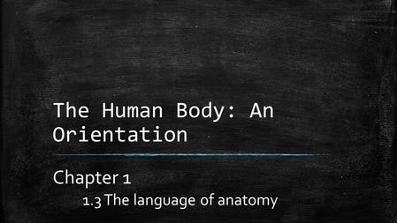 The Human Body: An Orientation Chapter 1 1.3 The language of anatomy.