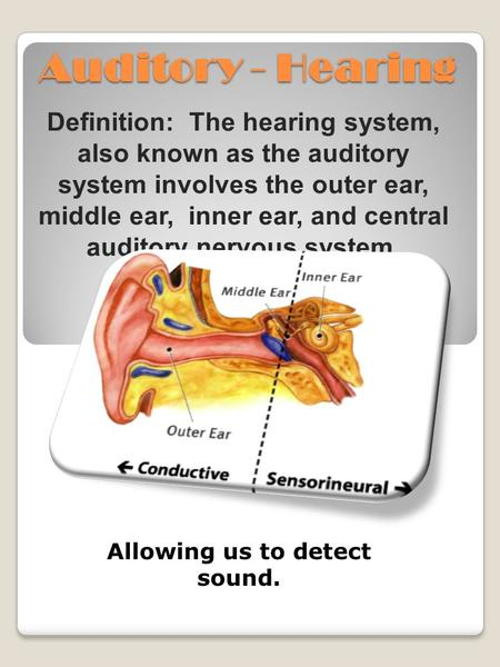 Auditory - Hearing Definition: The hearing system, also known as the auditory system involves the outer ear, middle ear, inner ear, and central auditory.