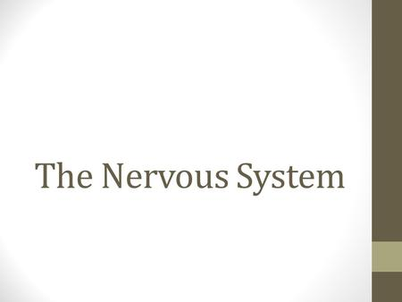 The Nervous System. 1. Two main divisions a. Central Nervous System (CNS) – consists of brain and spinal cord b. Peripheral Nervous System (PNS) – includes.