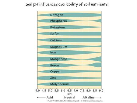 Soil pH influences availability of soil nutrients.