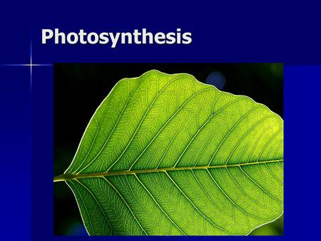 Photosynthesis. How do we grow a plant? But is that all????