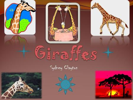 Sydney Clayton Giraffes' long necks help them reach their food in high places that other animals can't reach. Long legs help giraffes to be good runners.