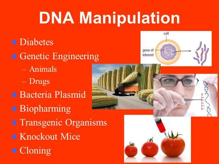 DNA Manipulation Diabetes Genetic Engineering – Animals – Drugs Bacteria Plasmid Biopharming Transgenic Organisms Knockout Mice Cloning.