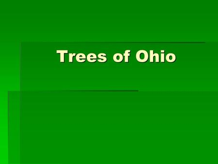 Trees of Ohio. Maples ( Acer ) Red Maple  3 shallow lobes  Dull green above, whitish and fuzzy beneath  Red, orange and yellow in the fall.