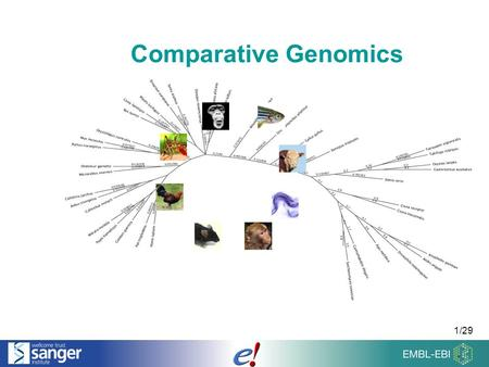 1/29 Comparative Genomics. 2/29 Overview of the Talk Comparing Genomes Homologies & Families Sequence Alignments.