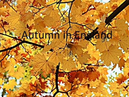 Autumn in England. It's autumn. All the leaves are falling down, Falling down, falling down. Falling, falling to the ground It is autumn! As they fall.