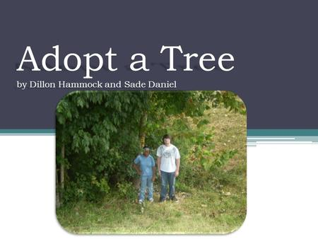 Adopt a Tree by Dillon Hammock and Sade Daniel. Names of our tree Sycamore Platanus occidentalis.