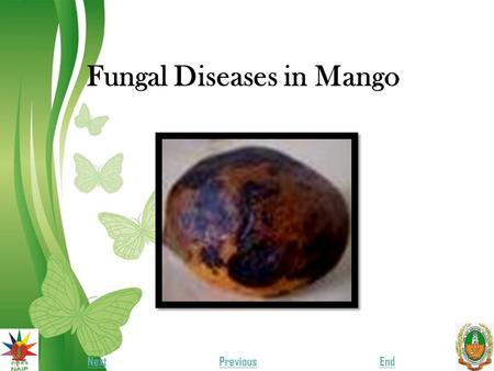 Fungal Diseases in Mango