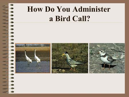 How Do You Administer a Bird Call?. Sharing the Resource.
