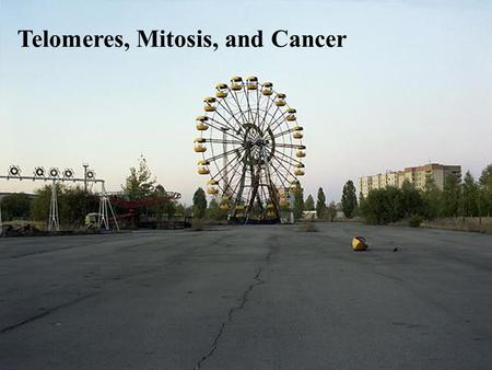 Telomeres, Mitosis, and Cancer. For life to exist, the information (genes) must be passed on.