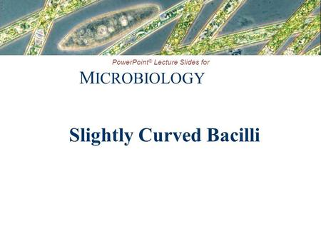 PowerPoint ® Lecture Slides for M ICROBIOLOGY Slightly Curved Bacilli.